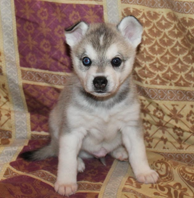 Cocos-litter-puppy