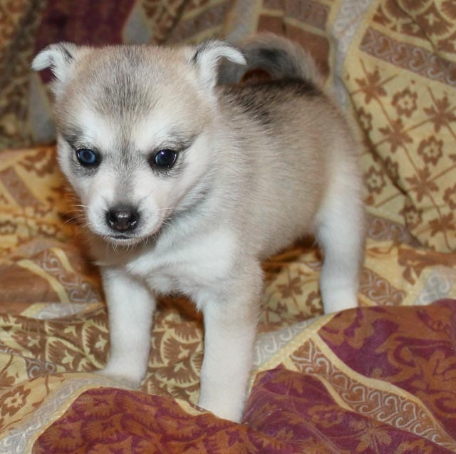 cocos-litter-puppy-2