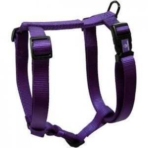 Harness for Klee Kai Puppy