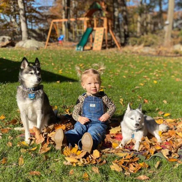 Alaskan Klee Kai Adoption- Brie